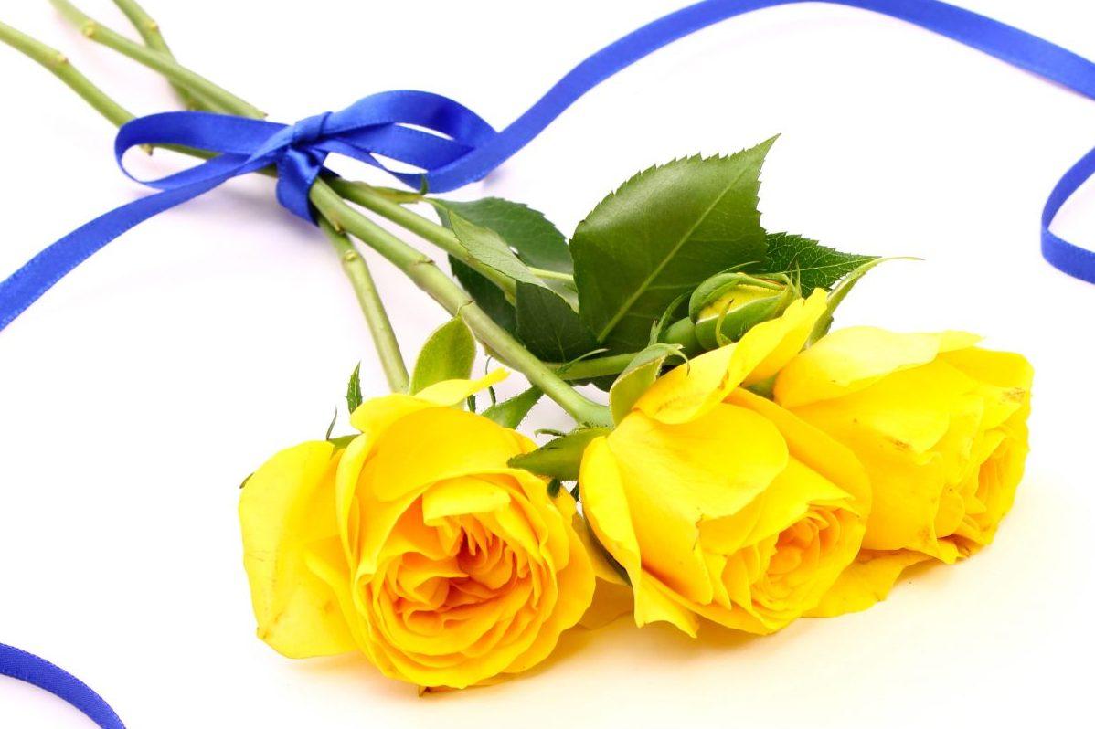 黄色いバラ 嫉妬 友情