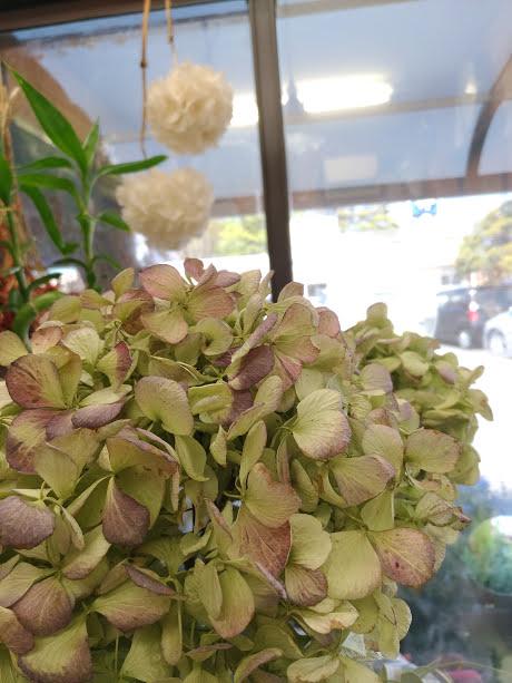 dry flower アジサイ500円