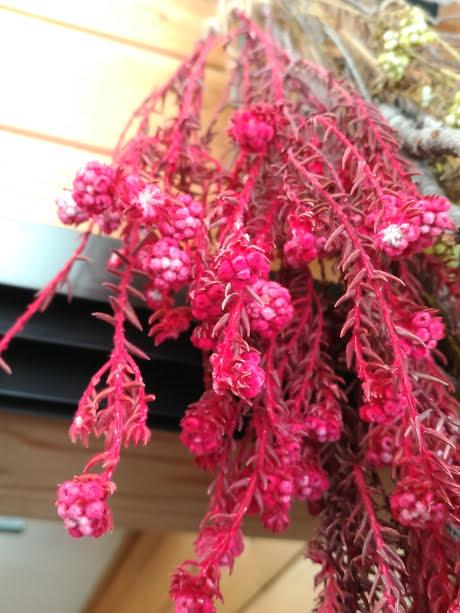 dry flower コットンフラワー赤2本束250円