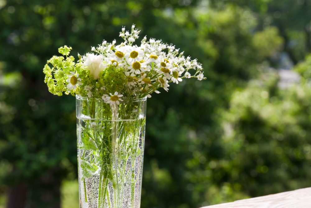 花瓶にカモミール