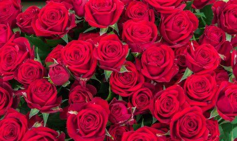 rose 赤