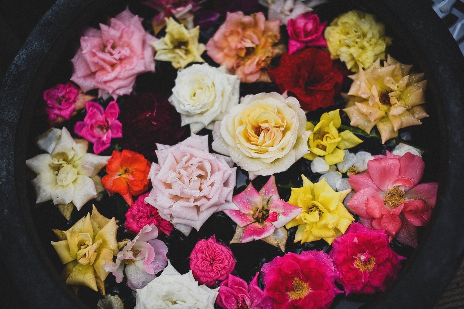 rose いろいろ