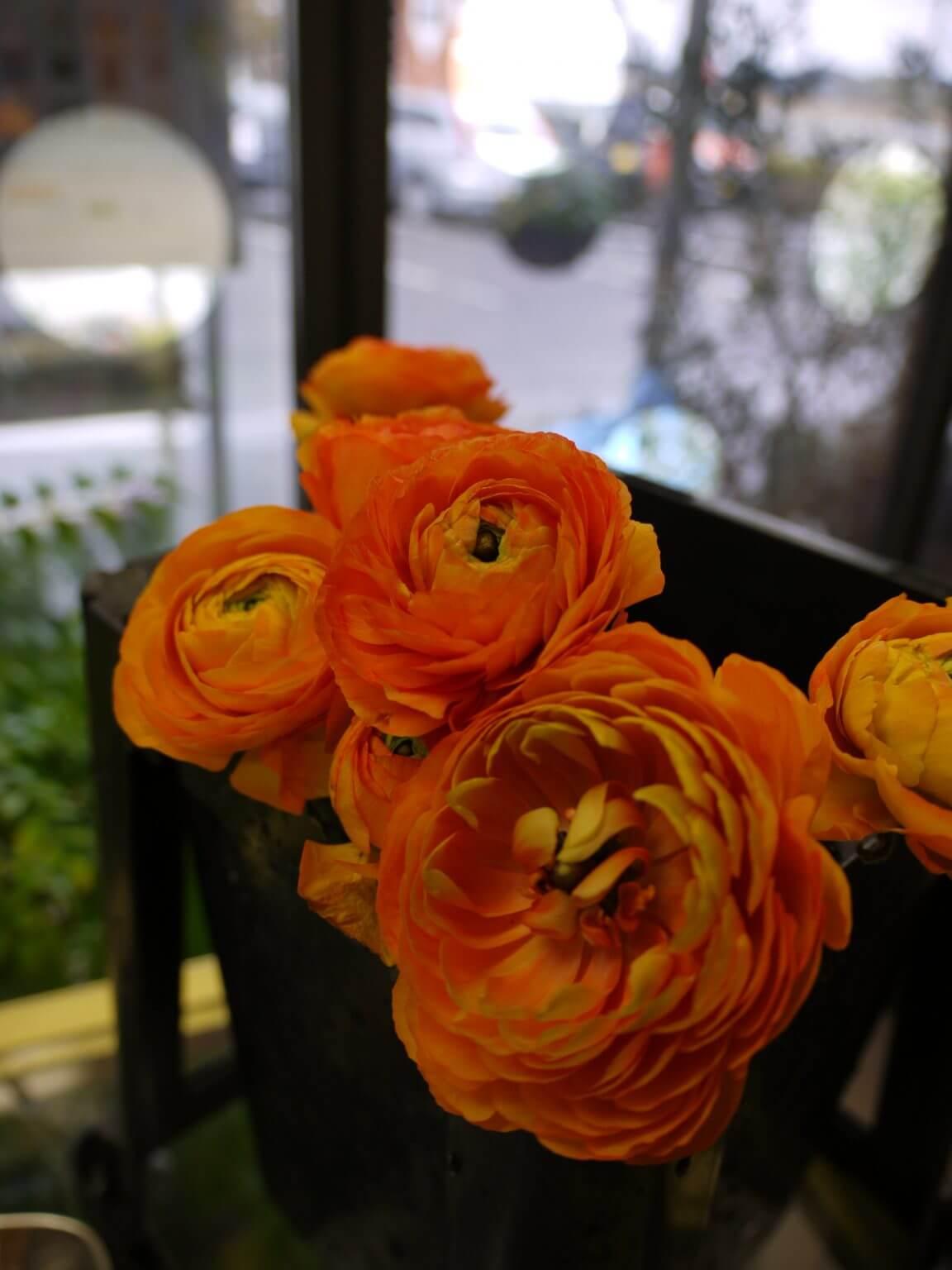 ラナンキュラス 橙