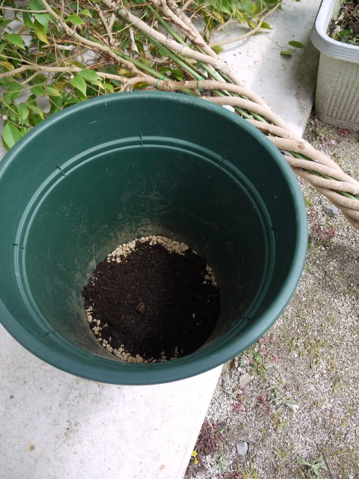 観葉植物用培養土を5cm入れた鉢