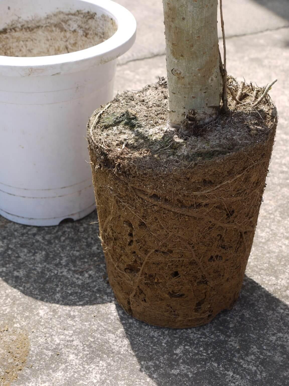 根がそんなにいっぱいじゃない