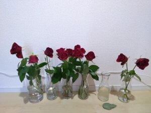 バラの花もち実験 9日目