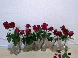 バラの花もち実験 8日目