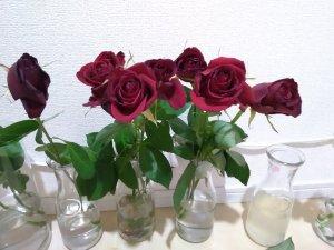 バラの花もち実験 10日目 10円玉と切花栄養剤