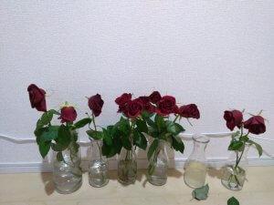 バラの花もち実験 10日目
