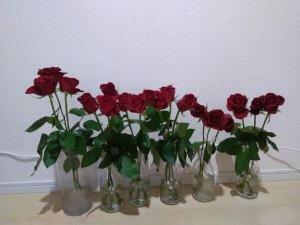 バラの花もち実験 7日目