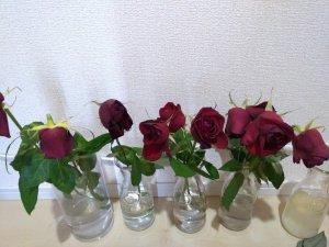バラの花もち実験 11日目 FINISH