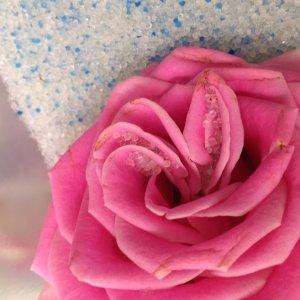 ドライフラワー シリカゲル 生花