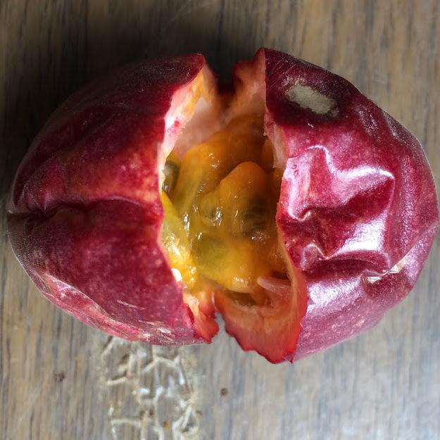 パッションフルーツの実4